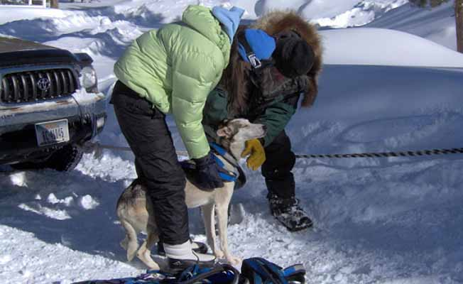 Klondike Dreams Sled Dog Rides profile image