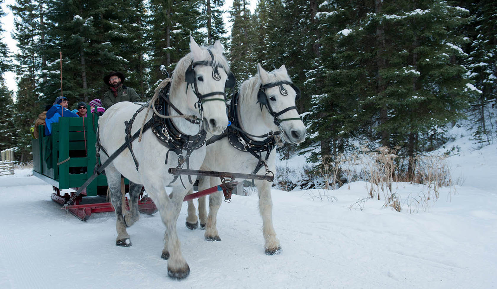 Lone Mountain Ranch Sleigh Ride Dinners profile image
