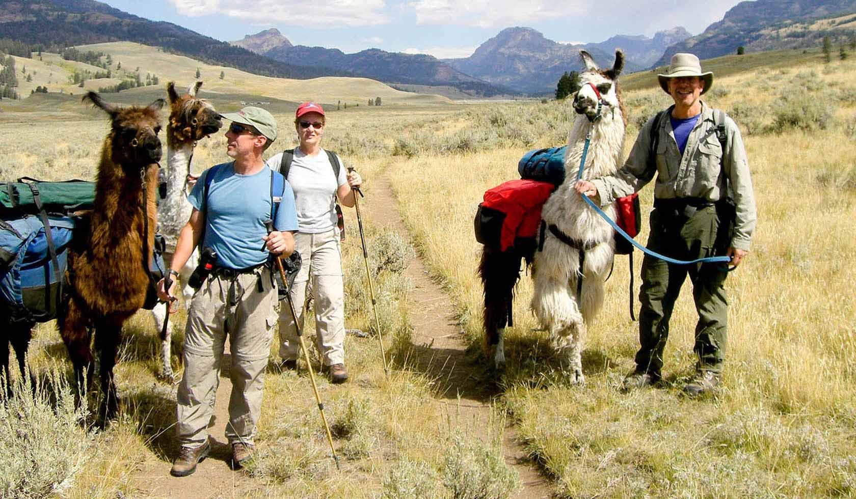 Yellowstone Llamas profile image
