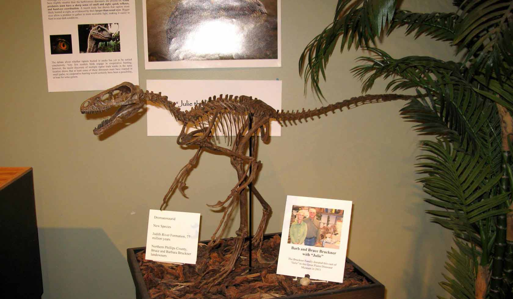 Great Plains Dinosaur Museum And Field Station - Great museums in us