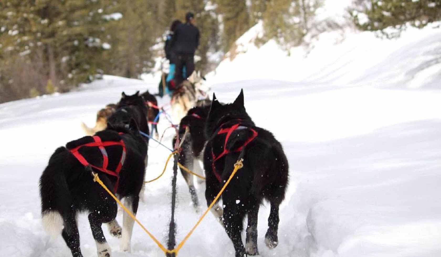 Absaroka Dogsled Treks profile image