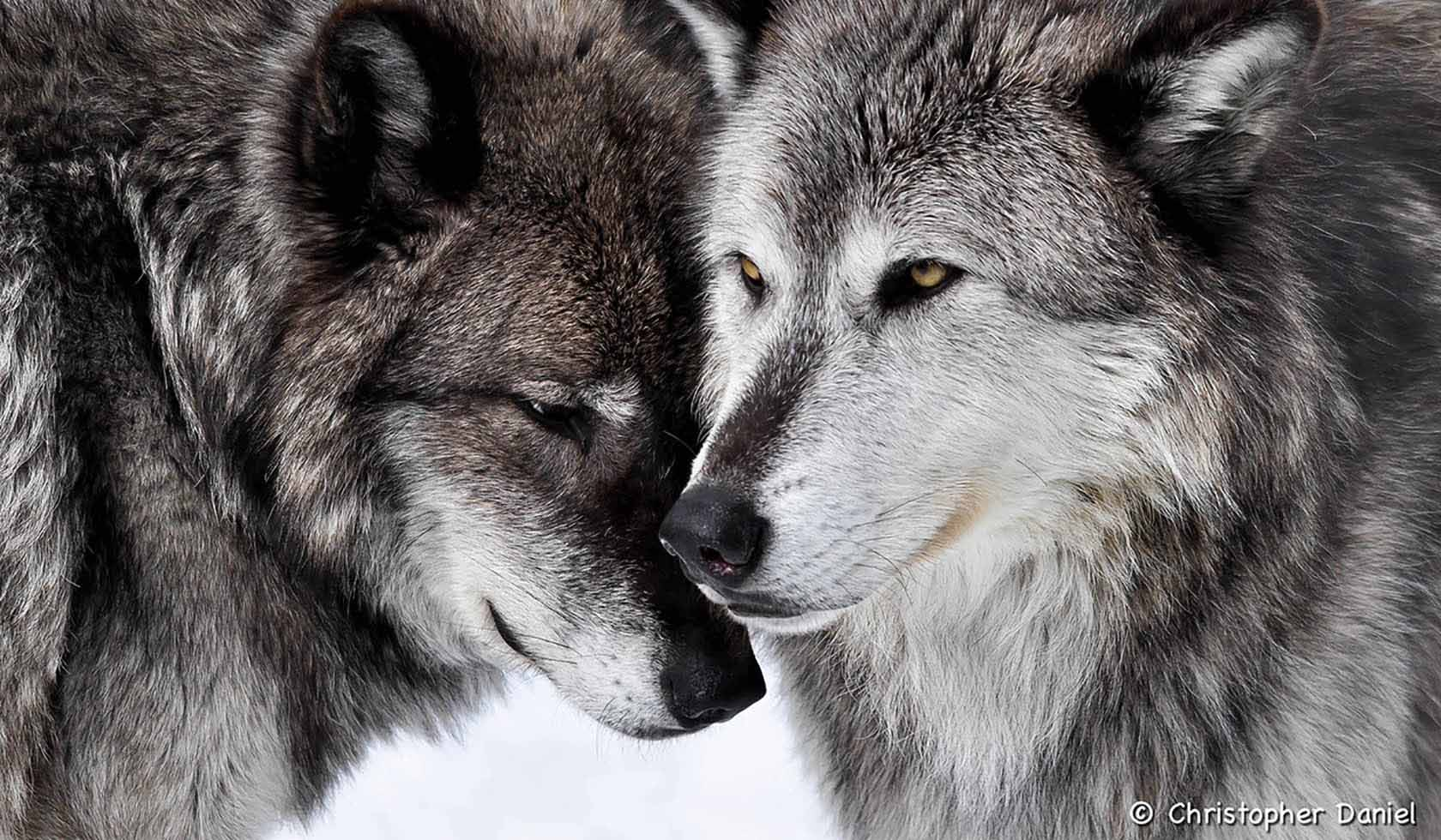 Two Top Yellowstone Winter Tours profile image